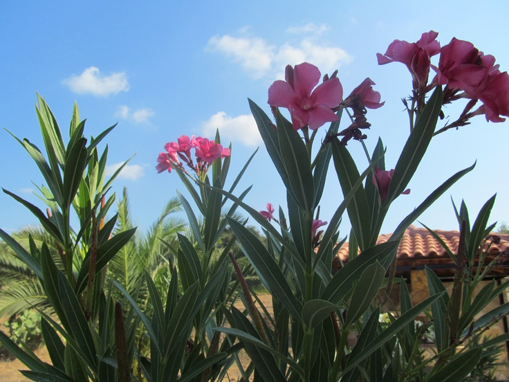 Our garden in Tragana