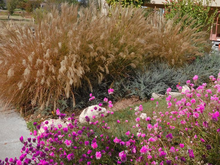 17 best images about gardening for texas panhandle  including native plants and xeriscaping on