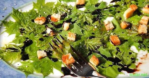 Ahorn ist mehr als nur ein Baum - Pflück dir einen gesunden Powersalat!