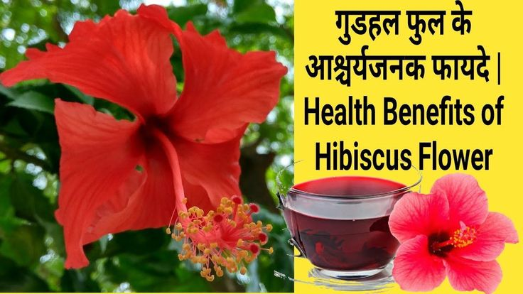 The Best Hibiscus Flower Means In Hindi And Review Flower Hibiscus Hindi Means Review In 2020 Hibiscus Tea Benefits Hibiscus Flower Meaning Hibiscus