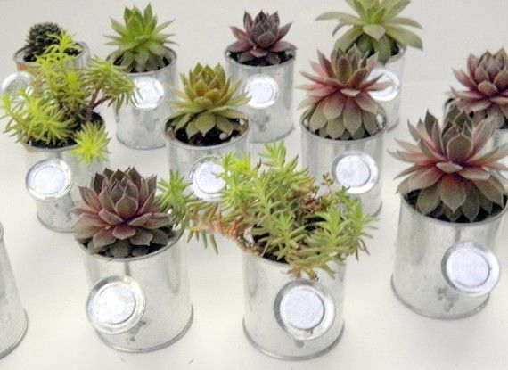 Love this idea for my office window.: Party Favors, Gardens Party, Weddings Favors, Weddings Showers Favors, Succulents Weddings, Favors Idea, Succulents Favors, Centers Piece, Gifts Idea
