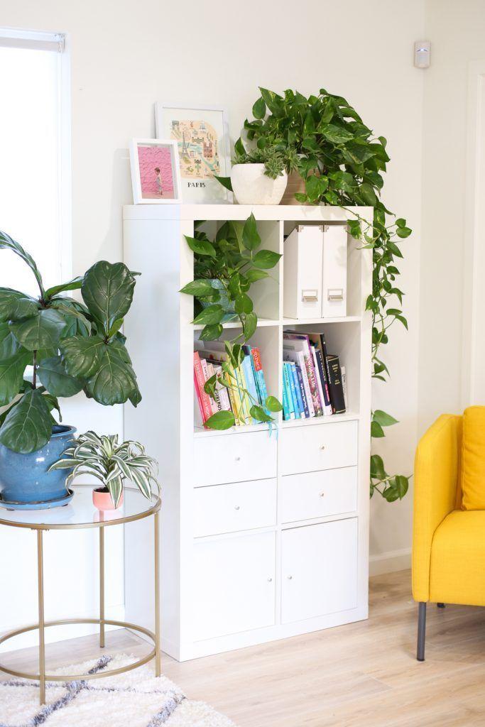 5 Steps to Super Happy Houseplants