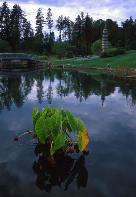 Kurimoto Japanese Garden, Edmonton, Alberta, Canada