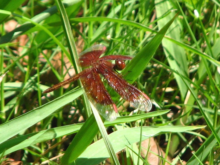 Try and take my camera with me everywhere i go. Got this great pic of a dragonfly while camping with a friend at Bramston beach.
