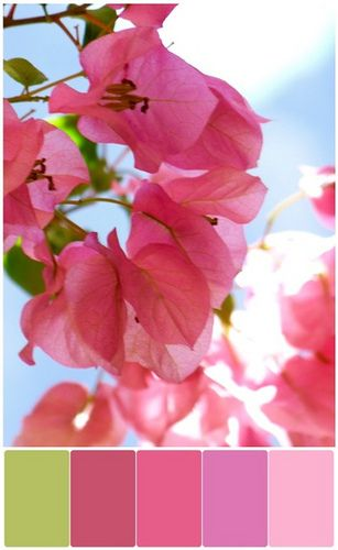 pink: Cherries Blossoms, Spring Blossom, Pink Flowers, Color Palettes, Colors Palettes, Colors Schemes, Colour Palettes, Sweet Peas, Colour Schemes