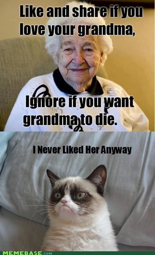 Funny Memes For Grandmas : Best images about cat on pinterest gift quotes memes