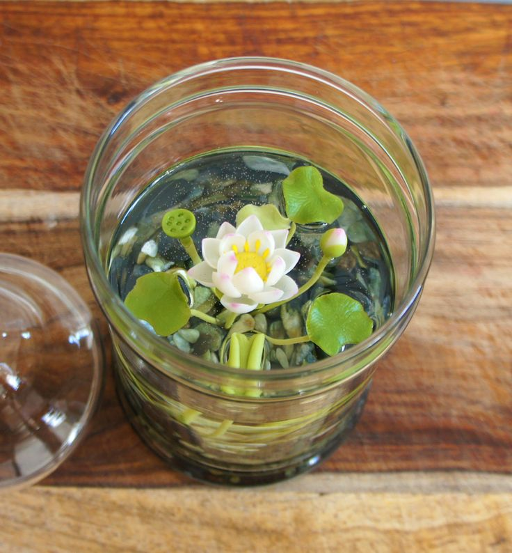 Miniature White Lotus Water Lily Terrarium by Miss Moss Gifts