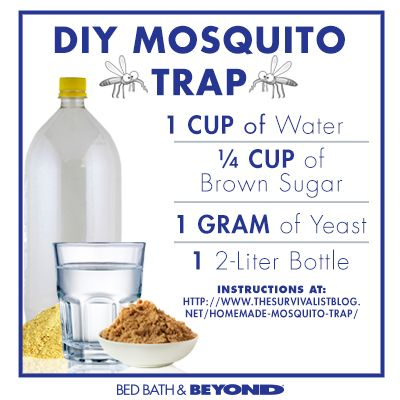 How to make a DIY Mosquito Trap. We made this trap and it works on all sorts of flying pests (like fruit flies)!