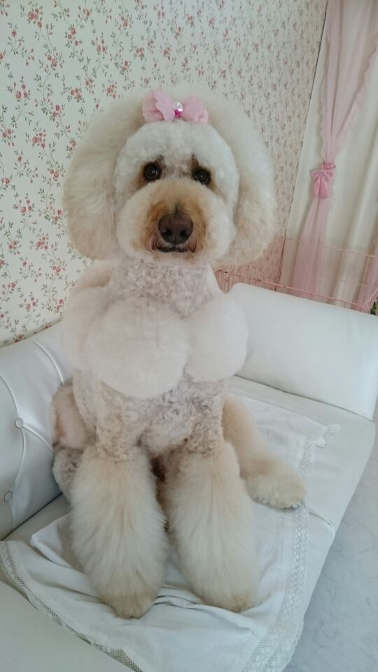 Lovely Dambo お風呂~!|犬親分☆