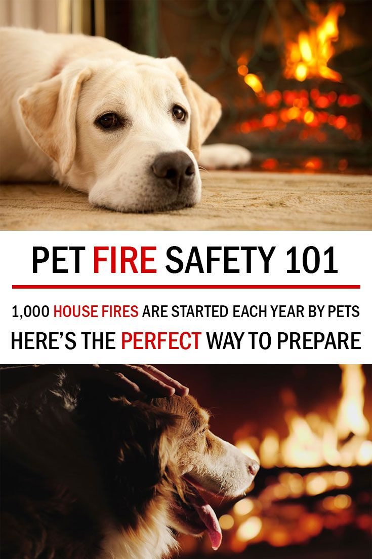 Pet Fire Safety 101 Pets Fire Safety Fire