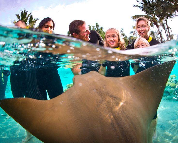 Ray Feeding At Discovery Cove Orlando