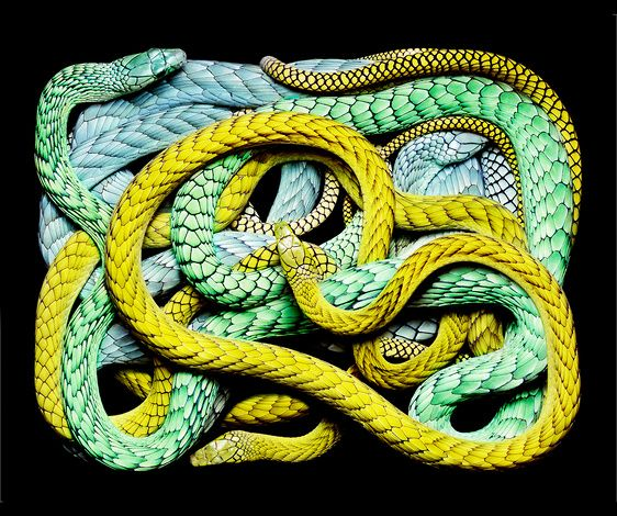 Art by Guido Mocafico: The Mars, National Geographic, Color, Blue Green, Snakes Art, Mocafico Guido, Blue Yellow, Photo, Beautiful Creatures