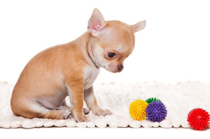 how to stop your dog from chewing everything