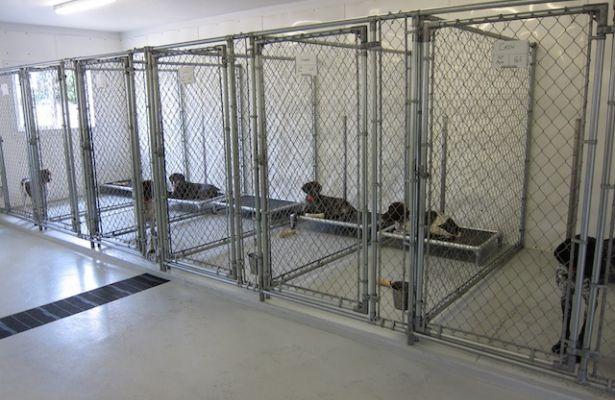 Kurunda Beds In 5 X10 Indoor Kennels Dogs Kennel Ideas