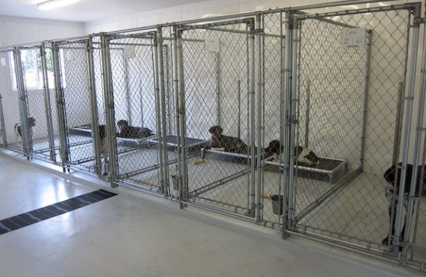Kurunda beds in 5 39 x10 39 indoor kennels dogs kennel ideas for Design indoor dog crate