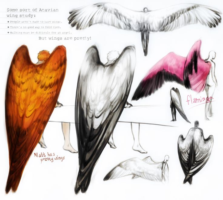 wings study- im gonna cry this is just what i needed