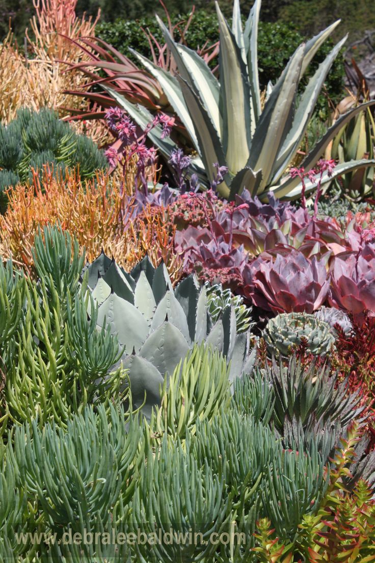 "From my Sunset magazine article, ""How to Create a Sea Creature Succulent Garden"": Gardens Ideas, Color Palettes, Succulents Gardens, Sunsets Magazines, Gardens Trees, Debra Lee, Landscape Ideas, Photo, Succulents Landscape"
