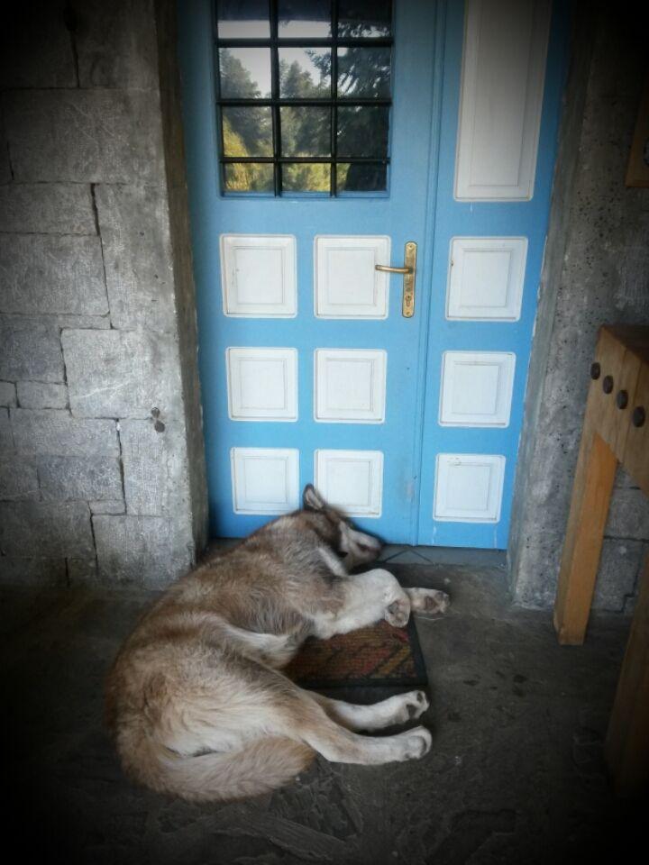 ...little pig little pig let me in!
