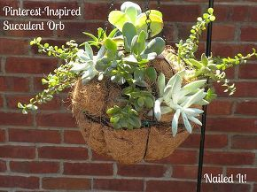 succulent orb experiment, container gardening, flowers, gardening, succulents, Succulent Orb Hanging Basket