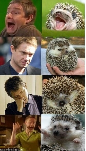 Watson Hedgehog