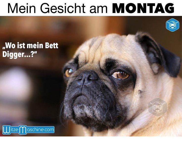 Mein Gesicht am Montag - Montag Witze, Müder Hund