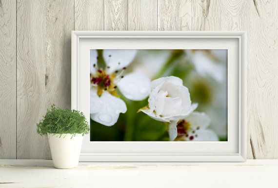 Printable white flower, pear blossom under a spring rain by Playful Pixie Studio #macrophotography #pearblossom #whiteflower #printable