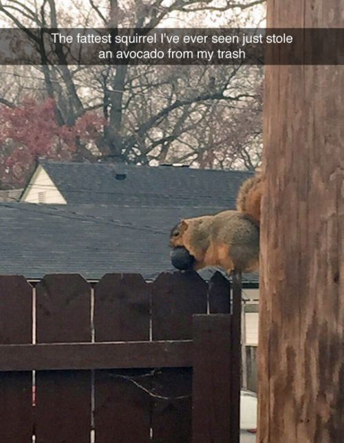 """""""The fattest squirrel I've ever seen just stole an avocado from my trash."""""""