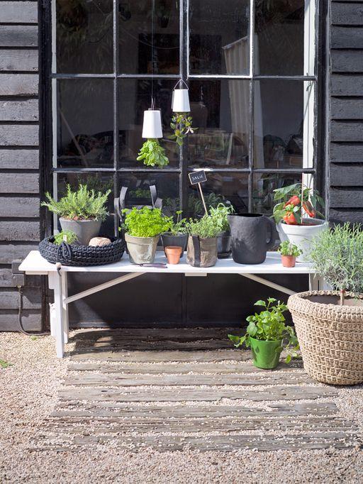 Stal je rozemarijn, je koriander en andere eetbare planten en kruiden uit in bijzondere potten, dan zijn óók lekker om naar te kijken!