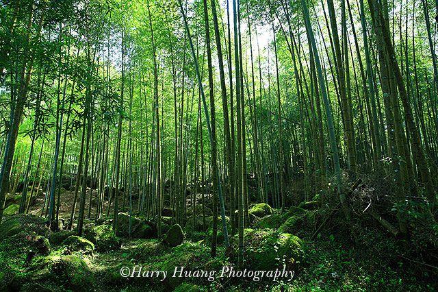 3_MG_1089-Bamboo, Sitou Nature Education Area, Chitou, Nantou County, Taiwan 竹林-竹子-竹廬-竹盧-森林浴-芬多精-孟宗竹-大自然-綠意-溪頭自然教育園區-溪頭森林遊樂區-臺大實驗林-南投縣-鹿谷鄉-南投-溪頭 | Flickr – 相片分享!