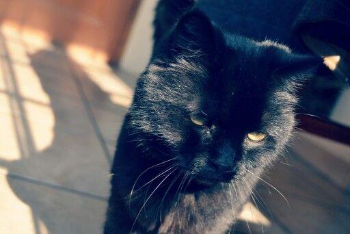 My beautiful cat... Photo by Jakobus du plessis