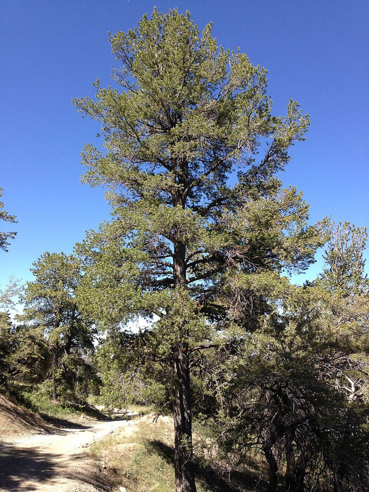 California native plants, Landscape, Landscape projects