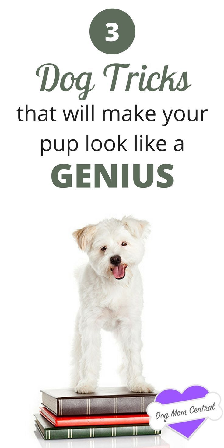 Teach your dog these fun, inventive tricks that will blow your friends and family away. Your dog will definitely look like a genius.  @KaufmannsPuppy