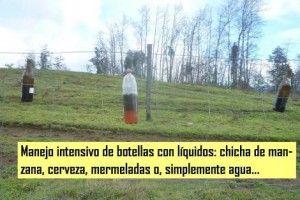 9.-_Botellas_trampa_2._Comuna_San_Juan_de_La_Costa.http://www.guioteca.com/patagonia/chaquetas-amarillas-alarma-por-la-aparicion-de-avispas-carnivoras/