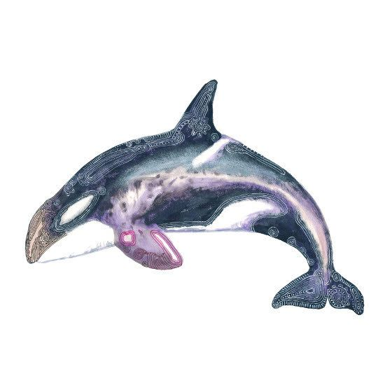 PRINT  orca painting  killer whale art  in dusky by ProtectedLand, $25.00