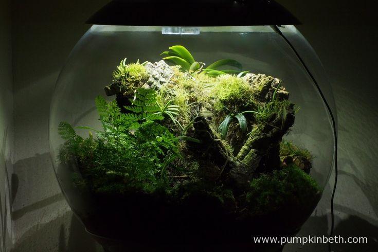White Orchid BiOrbAir Terrarium Trial (part six) - Pumpkin Beth