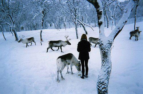 ReindeerWinter Shots, Reindeer Farms, Santa Reindeer, Animal Photography, Snow, Real Holiday, Winter Wonderland, Christmas Decor, Winter Whisperer
