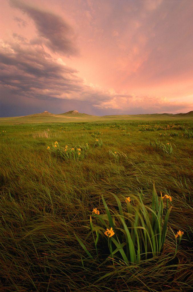 This is the Nebraska I love!  Yellow irises at Agate Fossil Beds National Monument, Nebraska - by Michael Forsberg
