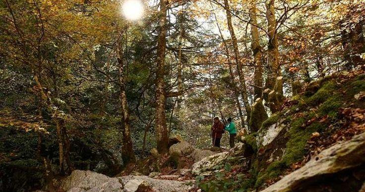 Navarra: Convocadas ayudas por 2,3 millones para trabajos #forestales de entidades locales e iniciativa privada