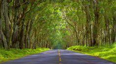 Tree Tunnel - Kauai, Hawaii