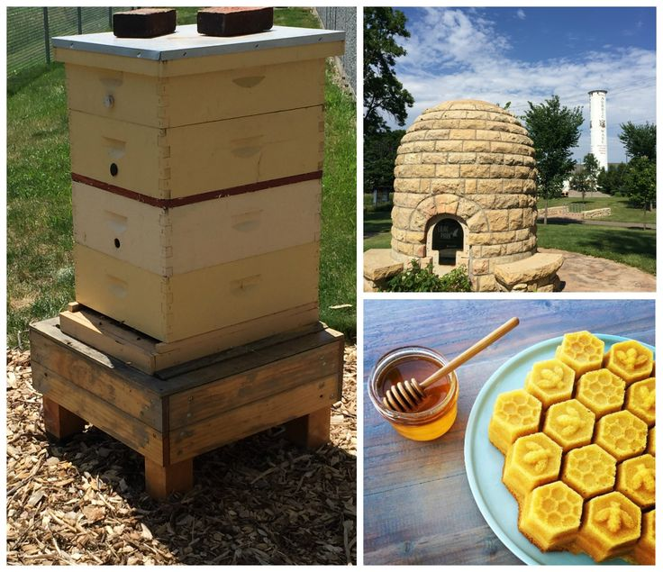 New Honey Bees Have Arrived