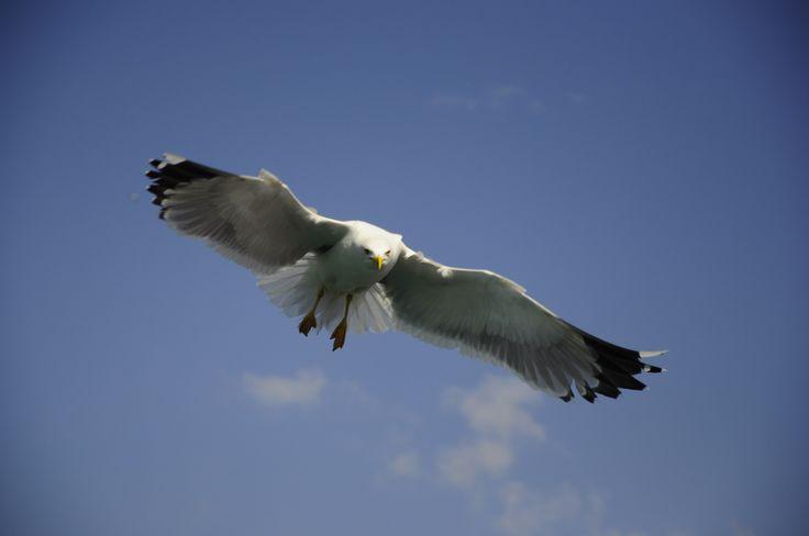 Kuşlar gguler