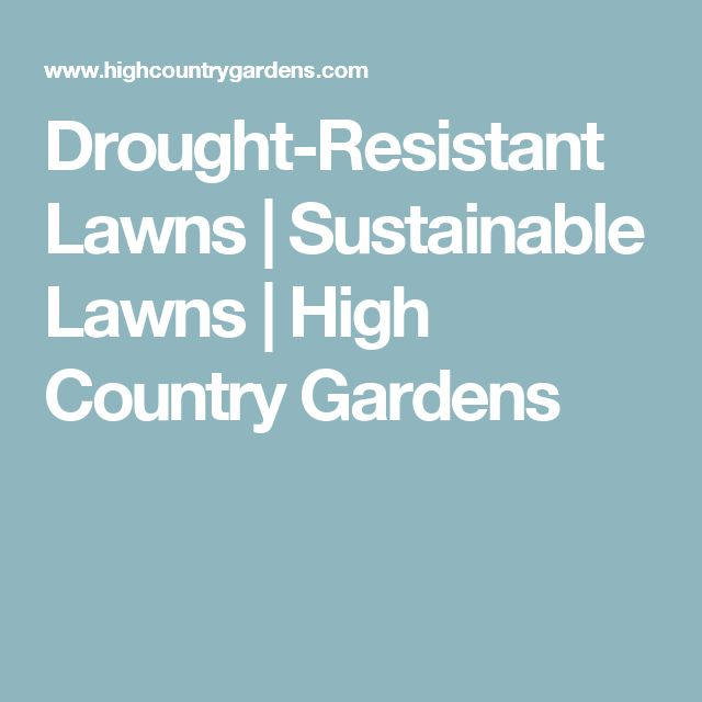 Drought-Resistant Lawns | Sustainable Lawns | High Country Gardens