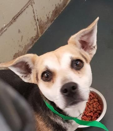 Meet Sally, an adoptable Beagle looking for a forever home. If you're looking for a new pet to adopt or want information on how to get involved with adoptable pets, Petfinder.com is a great resource.