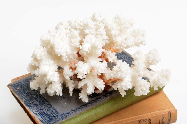 Gran Pieza de coral marino antiguo, coral marino blanco, coral espécimen, coral natural de Brocantebcn en Etsy
