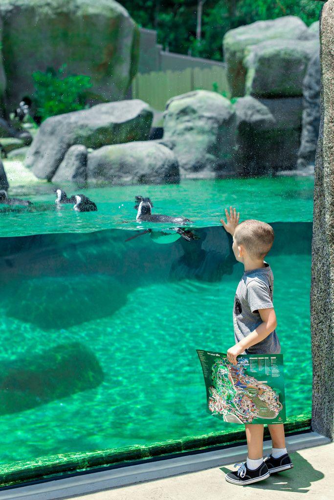 Dan Vi Mckinney Penguin Habitat Africa Rocks San Diego Zoo San