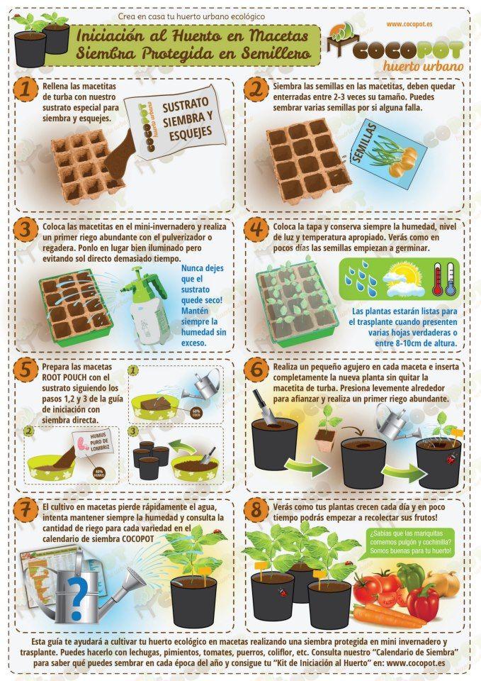 huerto en macetas: semilleros