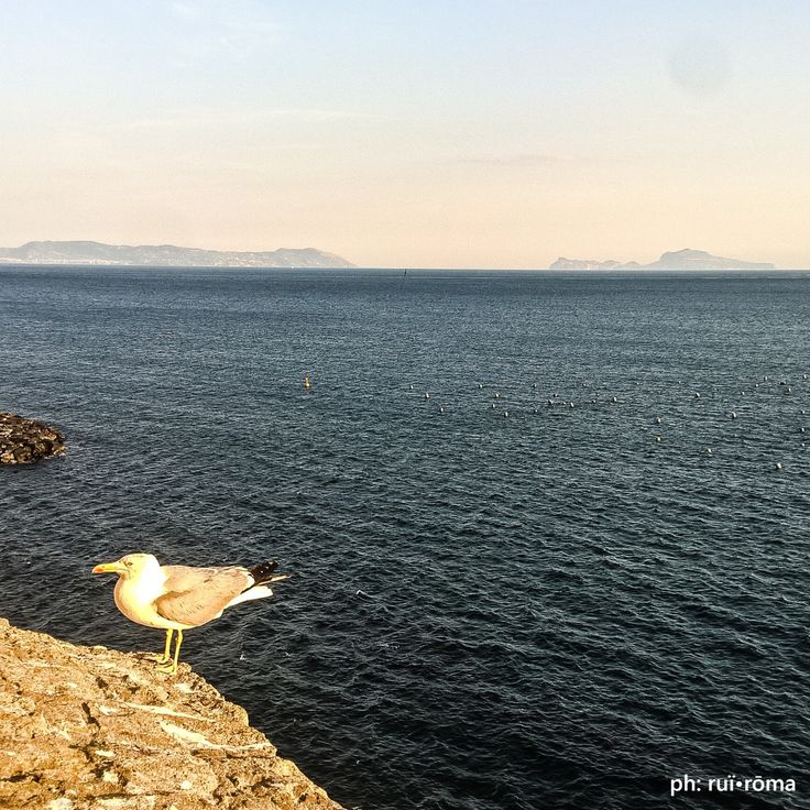 Viviamo tutti sotto lo stesso cielo, ma non tutti abbiamo il medesimo orizzonte. [K.Adenauer] #Napoli #Capri #PuntaCampanella #CastellDellOvo #DolceVita #Naples #orizzonte #Horizon #paradise #photo #photography #philosophy #Italy #Italian #life #light #cool #ammore #love #Naples #Campania #italy #sea #mare #igersnapoli #photooftheday #ruiroma