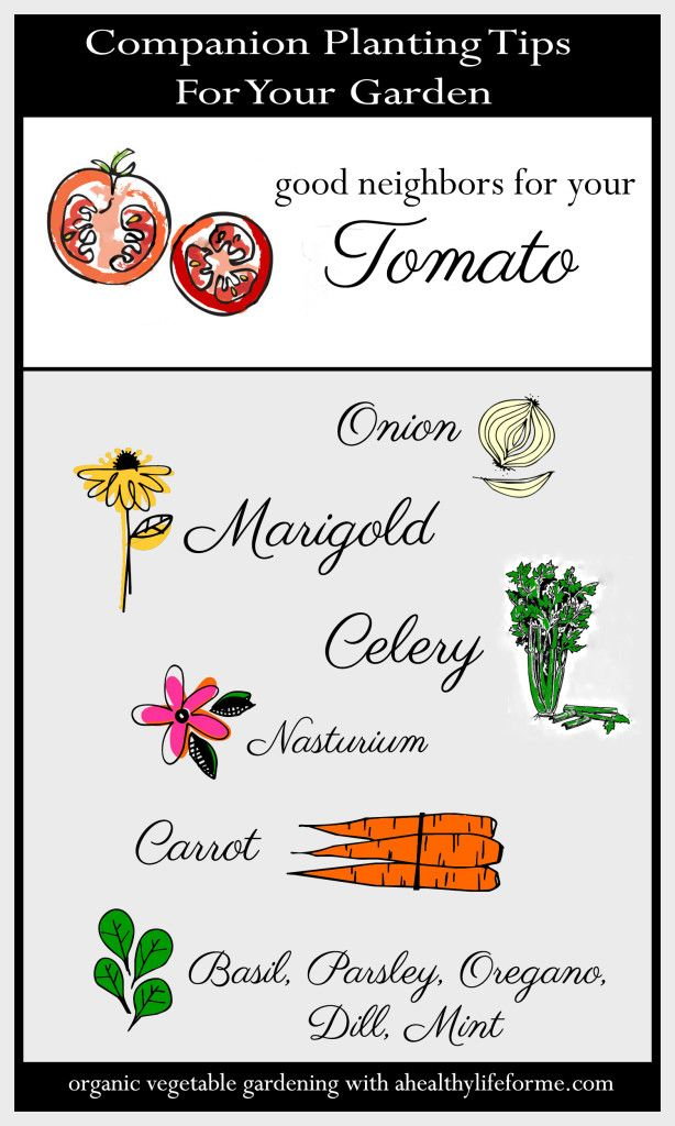 Companion Planting Tips for Tomatoes - A Healthy Life For Me
