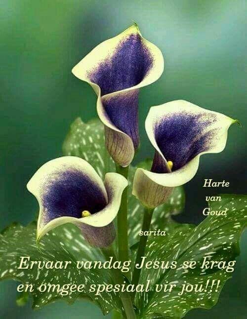 Jesus krag