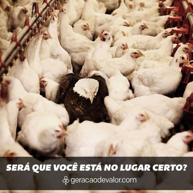 GV647 on Blog Geração de Valor    http://cdn.geracaodevalor.com/wp-content/uploads/2014/01/1658581_637383016341316_1501081690_o.jpg